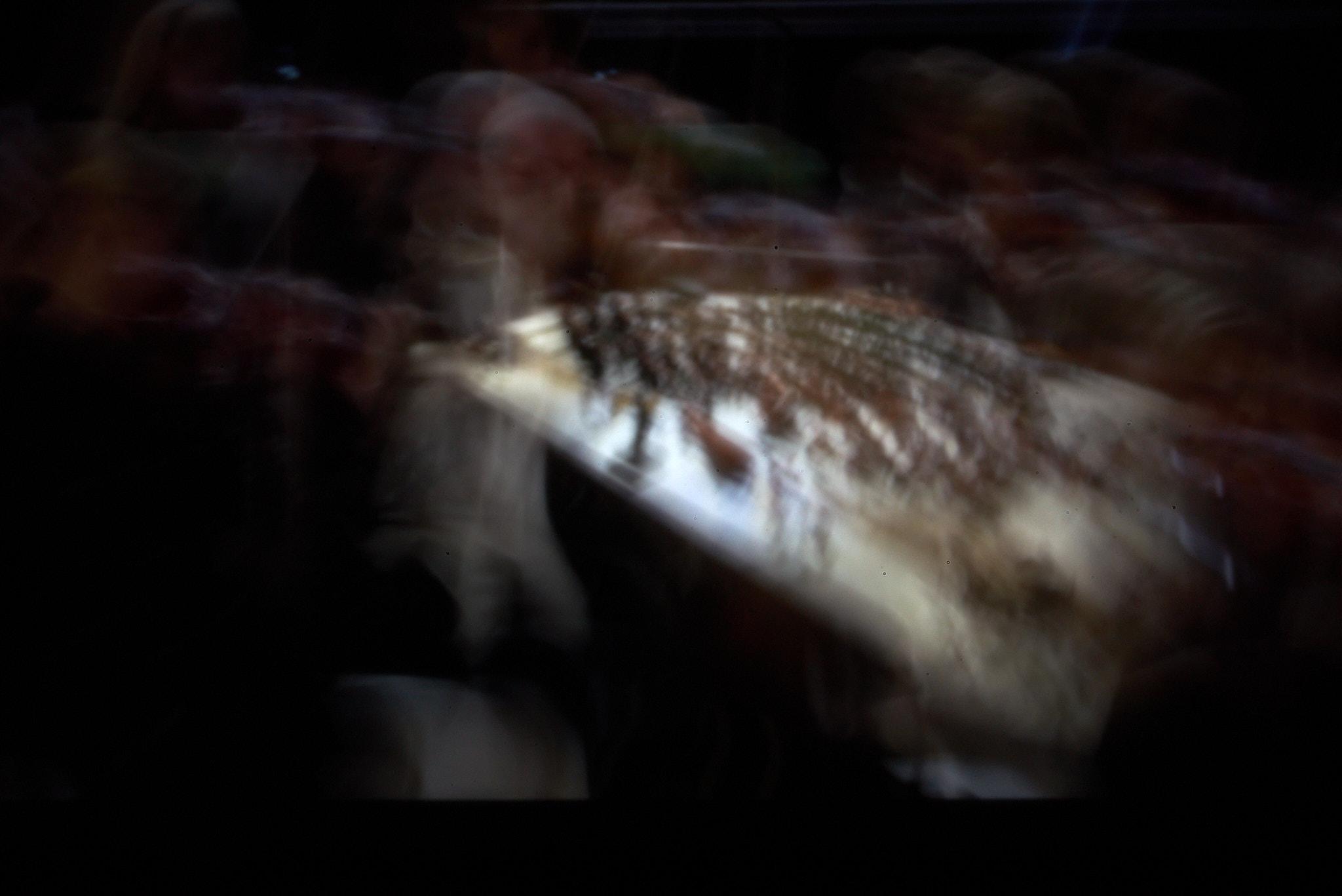 Jon Lord – The Telemann Experiment