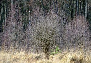 Landschaft – Zwischen Wahrnehmung und Projektion
