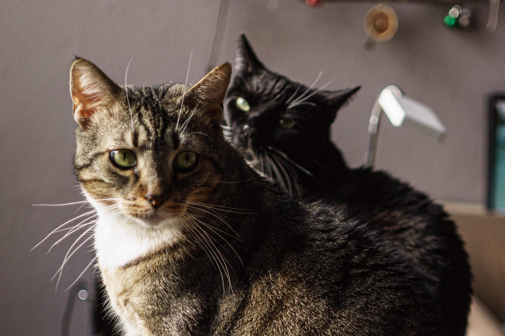 Warnung: Cat Content